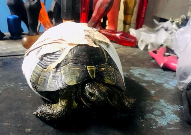 Kabuğu kırık kaplumbağaya kaportacıda operasyon
