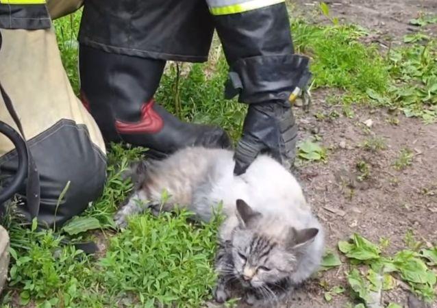 Rus itfaiyeciler, yangından kurtardıkları kediyi yeniden hayata döndürdü