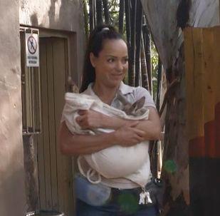 Annesi ölen bebek kanguruyu suni keseyle büyütüyor