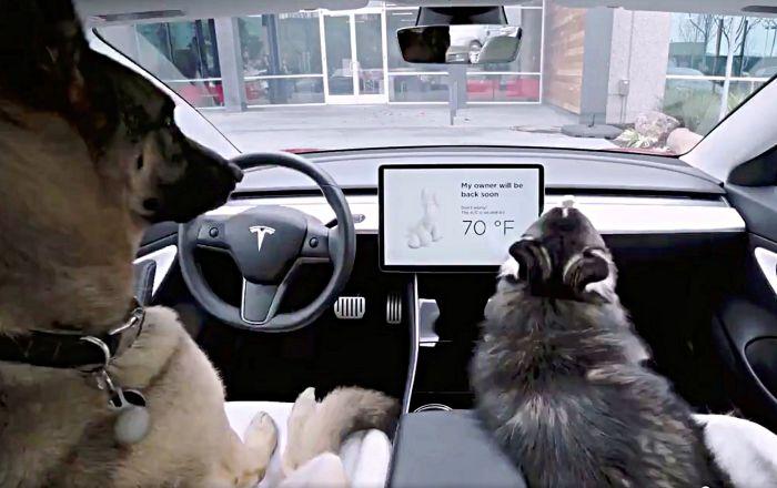 Tesla, araçlarındaki 'köpek modu' ile ilgili sorunu çözdü
