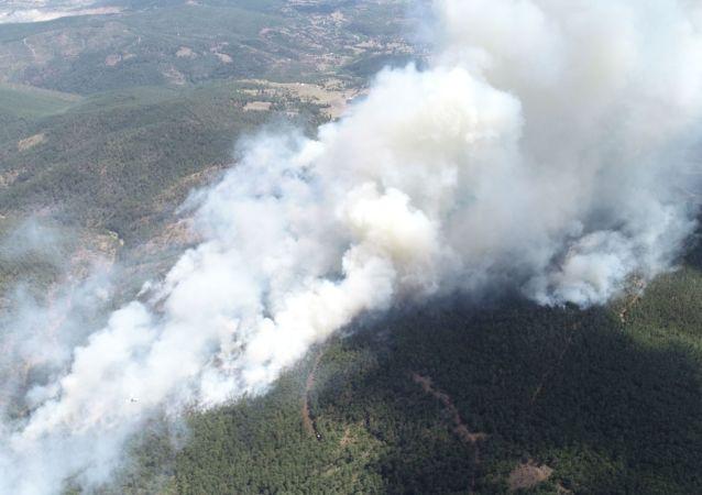 Bursa'da 9 farklı noktada orman yangını