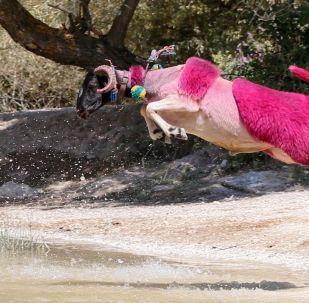 Hayvan sevgisini ortaya koyan yarışma, çobanlık konusunda dünyadaki ender organizasyonlar arasında gösteriliyor.