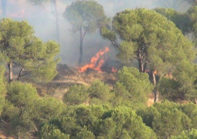 Balıkesir'in Ayvalık ilçesinde ormanlık alanda bir otomobilden atılan izmaritten çıktığı iddia yangın vatandaşların da yardımıyla kısa sürede kontrol altına alındı.