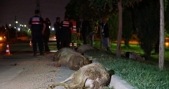 Eskişehir'de aşırı hız yaptığı öne sürülen otomobil koyun sürüsüne daldı. Kazada 2 kişi yaralanırken, 10 koyun ise telef oldu.