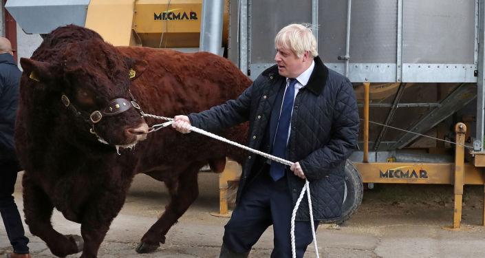 Brexit çıkmazına saplanan İngiltere yakın tarihinin en çalkantılı döneminden geçerken Başbakan Boris Johnson İskoçya'nın Aberdeen kentinde çiftlik ziyaretinde, 6 Eylül 2019
