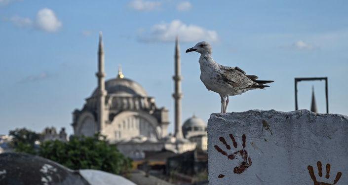 İstanbul - martı