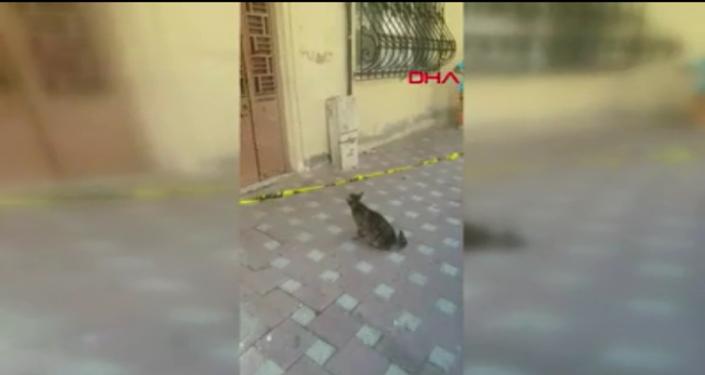 Sultanbeyli'de depremde zarar gördüğü için tahliye edilen binanın kapısında sürekli miyavlayan bir kedi dikkat çekti. Kedi, yavrularının binada kaldığı anlaşılana kadar miyavladı ve sonunda bebelerine kavuştu