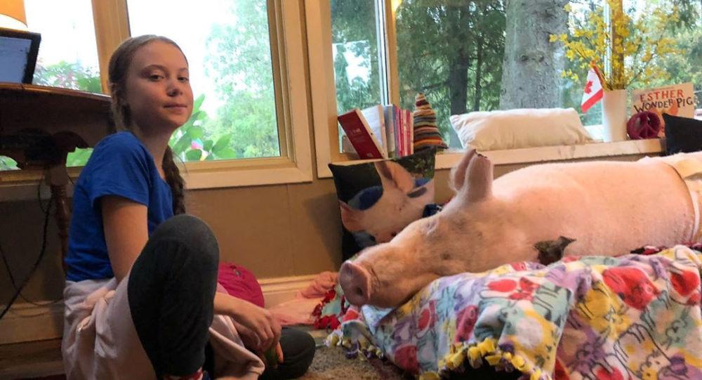 Greta Thunberg, Kanada'da bir hayvan sığınağını ziyaretinde 'Harika Domuz Esther' ile arkadaşlık kurarken
