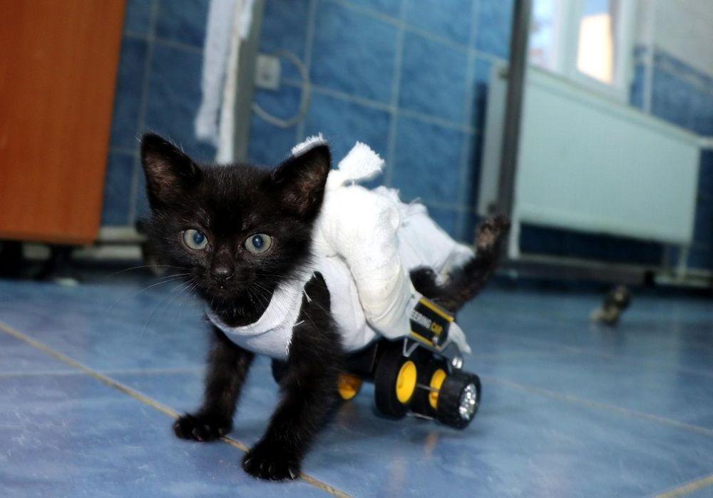 Edirne Belediye Başkan Yardımcısı Ertuğrul Tanrıkulu da barınağa gelerek kedinin tedavi sürecini takip etti.