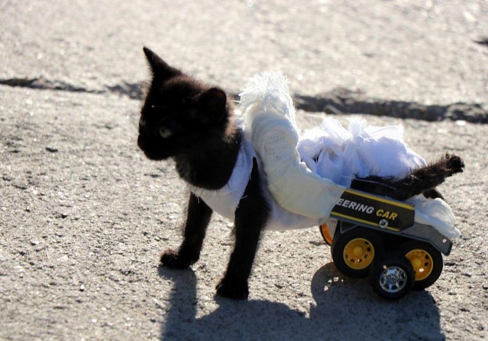 Tanrıkulu, gazetecilere yaptığı açıklamada, arka ayakları ezilmiş kedinin yaşaması için ellerinden gelen çabayı göstereceklerini söyledi.