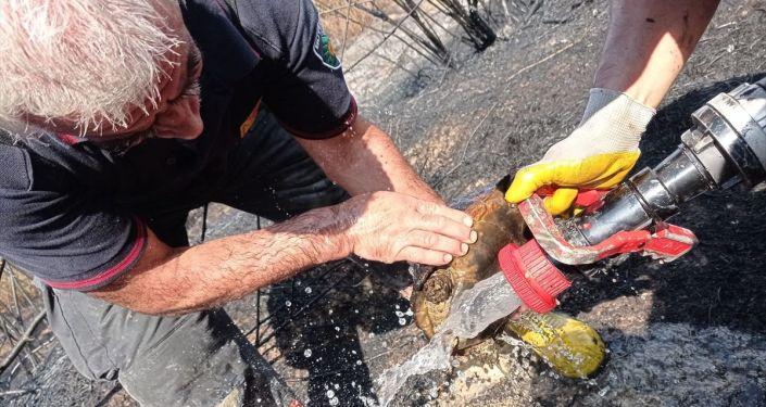 Malatya'da alevler arasında kalan kaplumbağayı itfaiye kurtardı