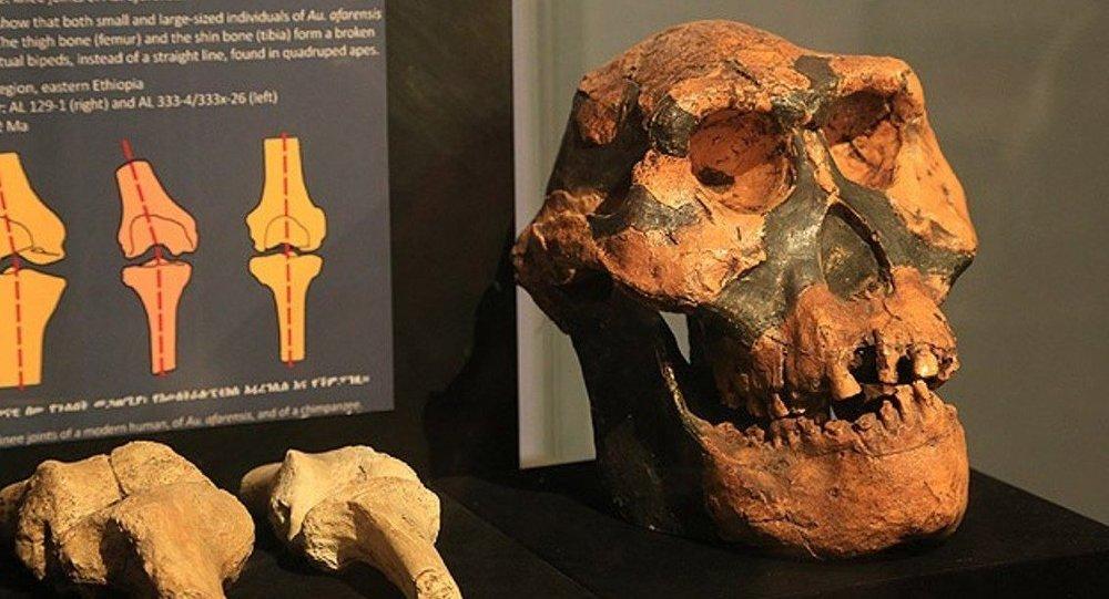 Etiyopya'da 3 milyon yıllık insansı fosil