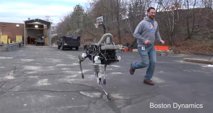 Evcillerin yerine robotlar geliyor