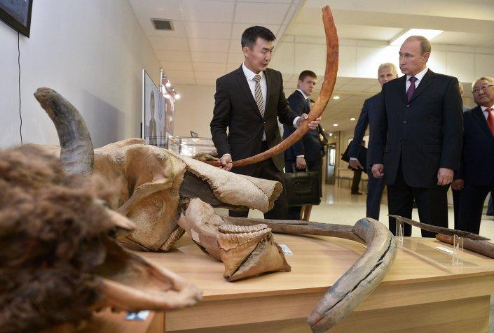 Eylül 2014'de Yakutistan gezisi sırasında mamut müzesini ziyaret eden Rusya Devlet Başkanı Putin, DNA hücreleri korunan ve kan örnekleri -17 derecede muhafaza edilen mamutun klonlanmasını istemişti.