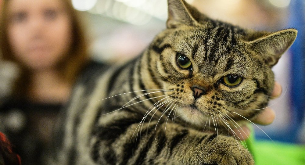 Dünya kedilerin kökeni Türkiye