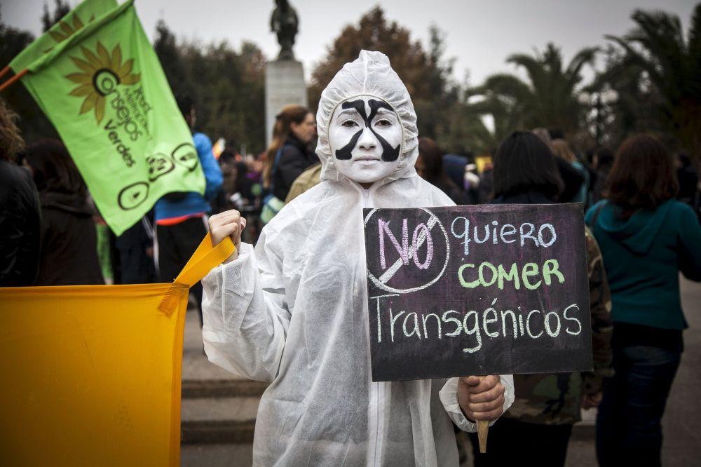 """Şili'de GDO'nun doğaya ve insan sağlığına verdiği zararlara dikkat çekmek ve yasaklanmasını sağlamak amacıyla yapılan """"Monsanto'ya Karşı Yürüyüş"""""""