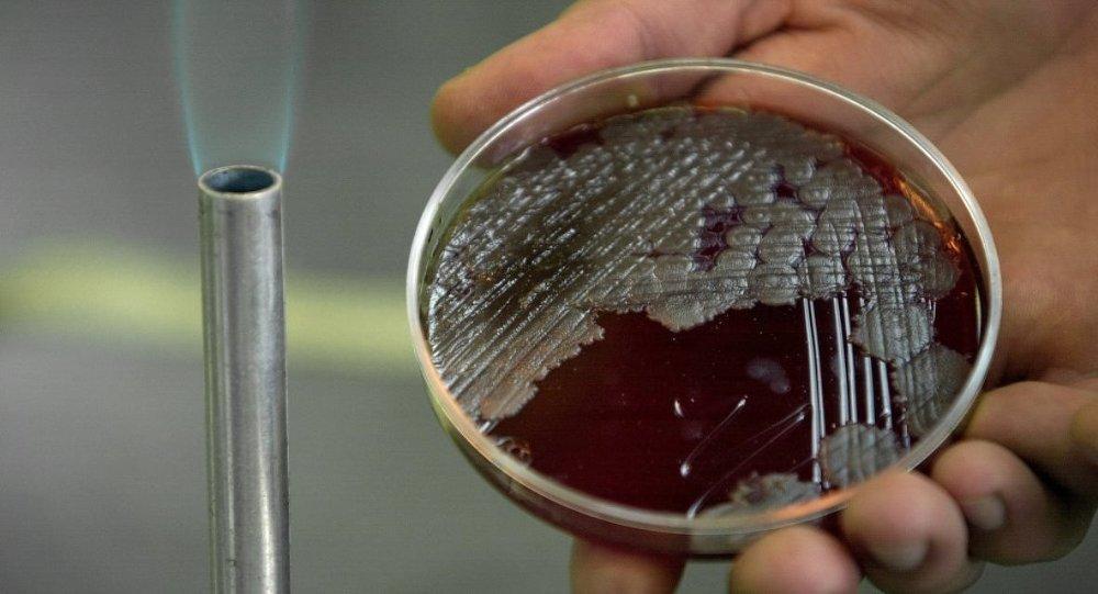 şarbon bakteri