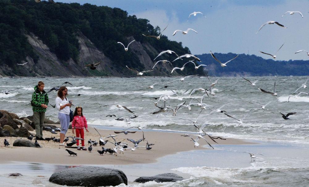 Baltık Denizi'nin sahilinde yürüyen insanlar