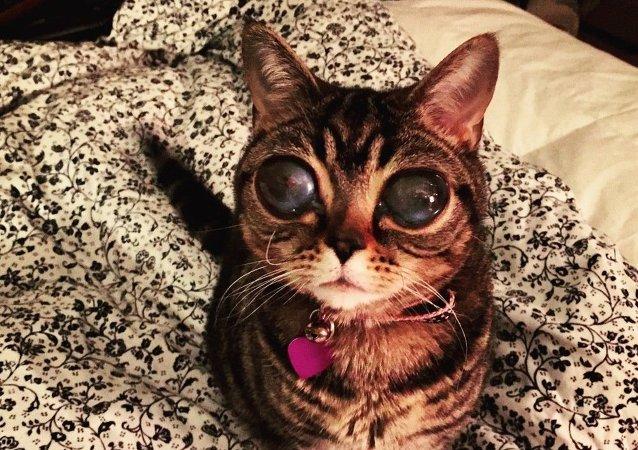 Uzaylı Kedi