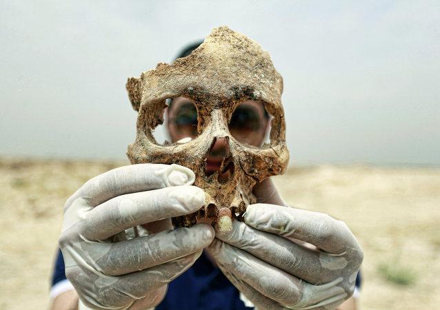 İnsan kafatası