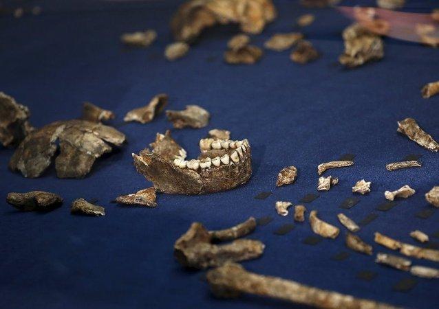 Yeni bir insan türü bulundu: Homo Naledi