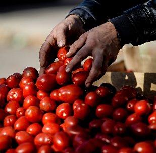 Rusya'da tarım fuarı - domates