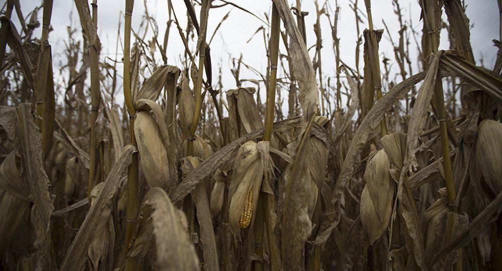 Çinli Mo Hailong, ABD'deki mısır şirketlerine yönelik komplo hazırladığı yönündeki iddialarını kabul etti.