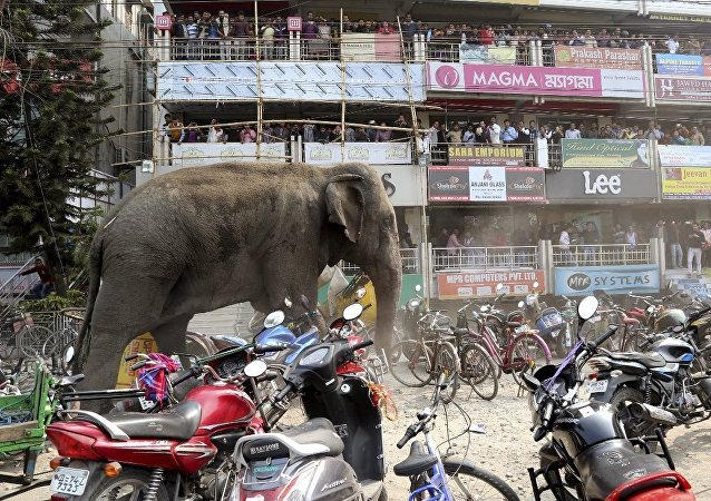 Fil-Hindistan