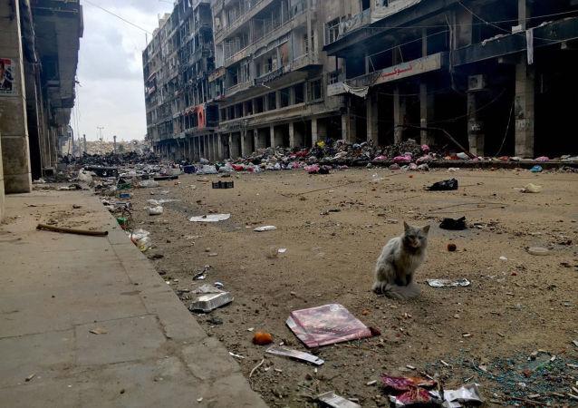 Halep Eski Şehir, sokaklarından birini gezinen kedi.