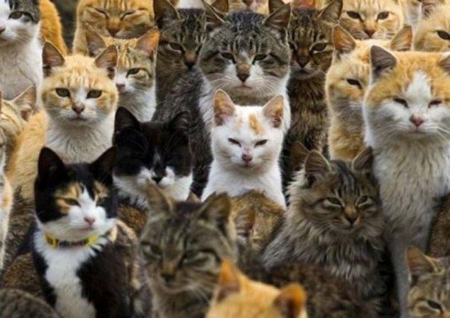 Japonya'da Kedi Günü