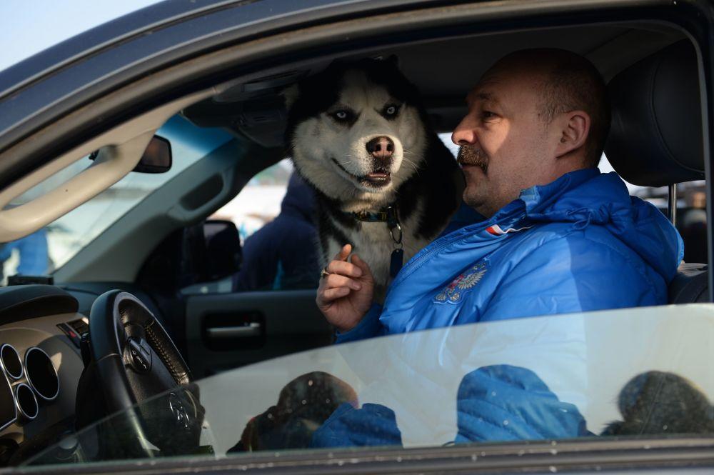 Sibirya'da Husky Festivali