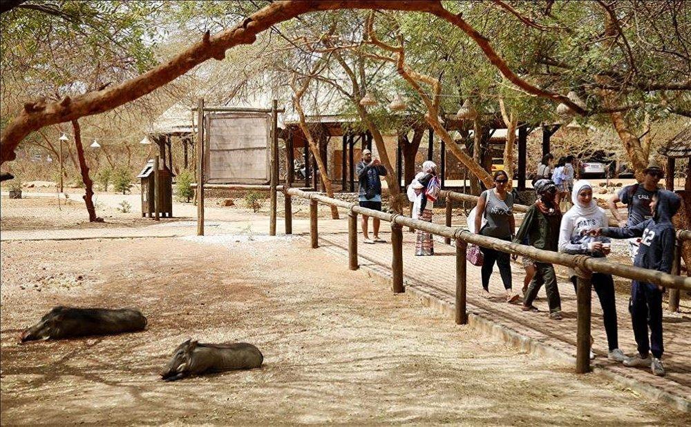 Senegal vahşi yaşam meraklılarını bekliyor