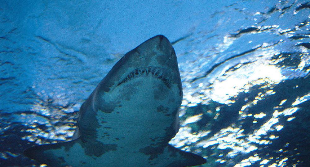 Fotoğraf çekilen kadına köpekbalığı saldırdı