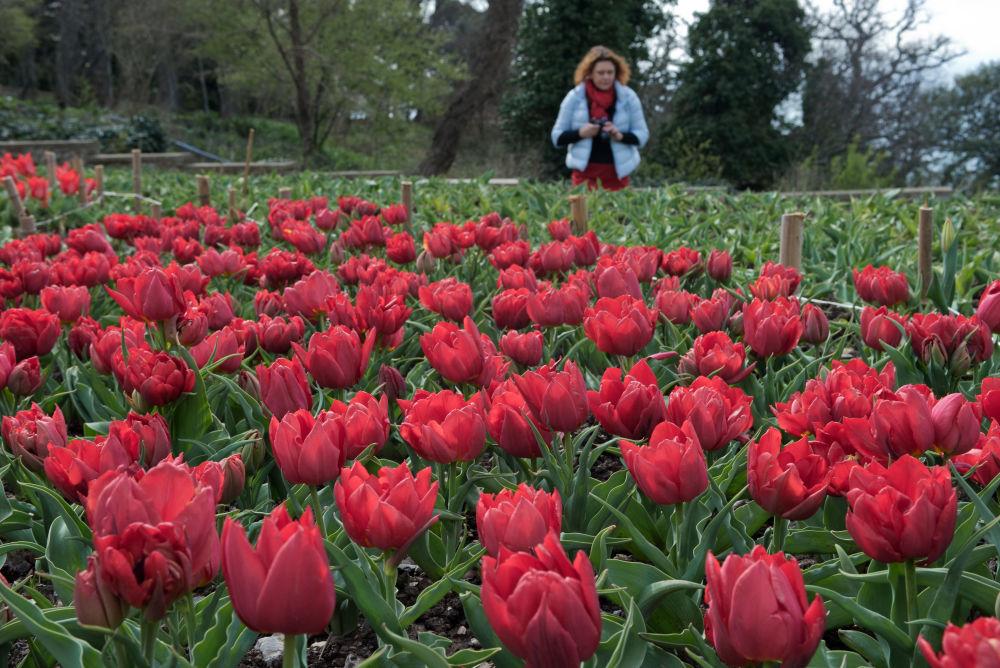 Kırım'da Nikitskiy Botanik Bahçesi