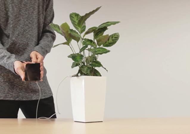 Evinizdeki bitkiler çok yakında telefonunuzu şarj edecek