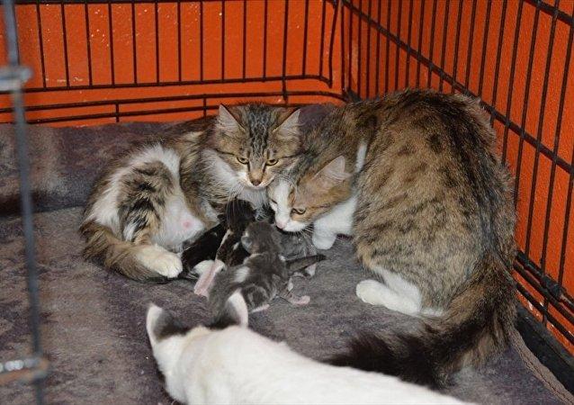 Yüksekova'dan toplanan kediler