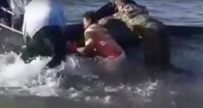 Meksika'daki bir sahilde, 30'a yakın balina karaya vurdu.