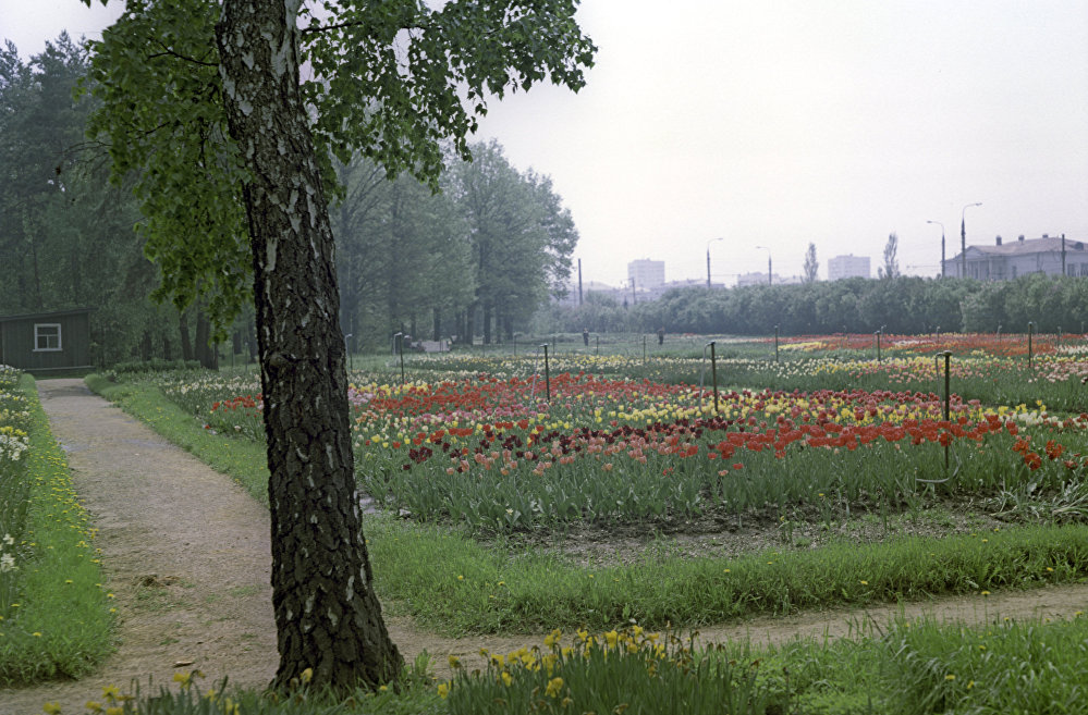 Bilimler Akademisi'nin St. Petersburg'daki Botanik bahçesi