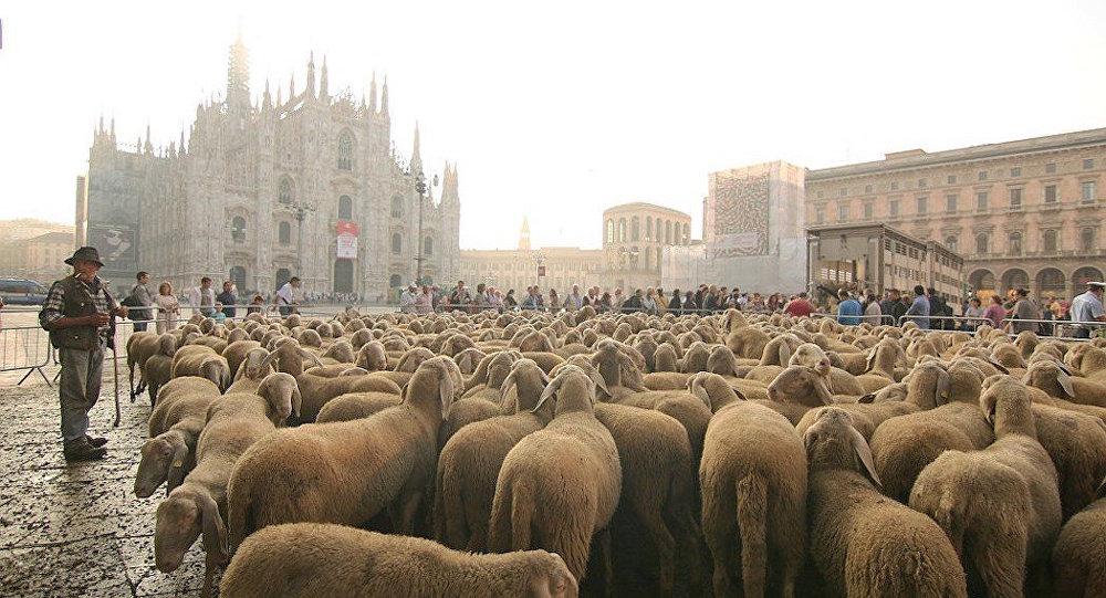 İtalya'da çobanlık yine moda