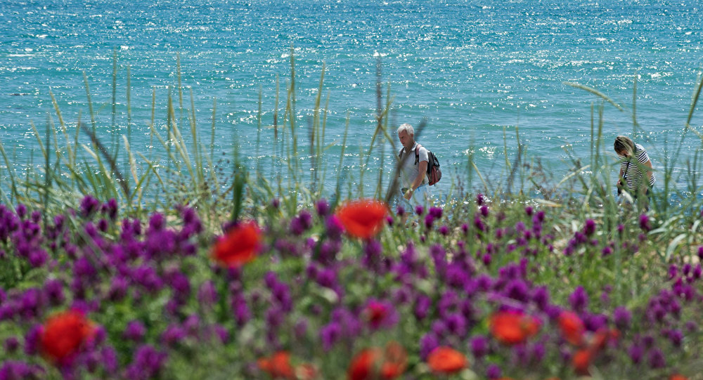 Kırım'ın Feodosiya kentindeki deniz kıyısında bir çiçek tarlası.