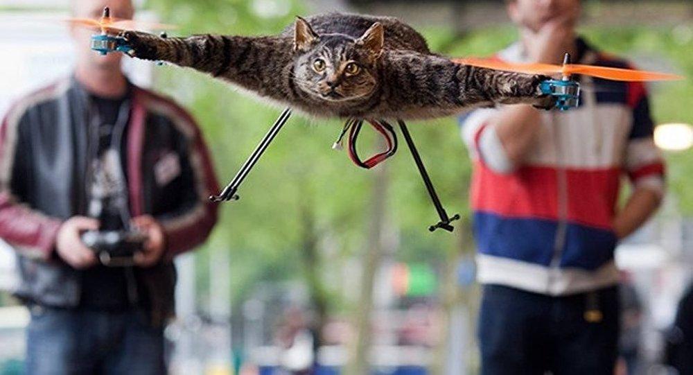 Hollandalı Bart Jansen, ölen kedisini drone haline getirdikten sonra şimdi de ölü bir inekten helikopter üretecek.