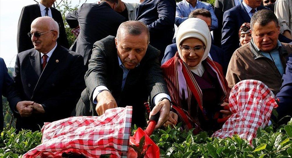Cumhurbaşkanı Erdoğan - eşi Emine Erdoğan - TBMM Başkanı  Kahraman - MGK Genel Sekreteri Hacımüftüoğlu - Yargıtay Başkanı Cirit