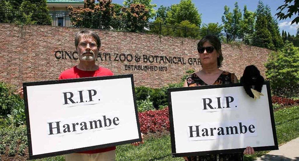 Goril Harambe