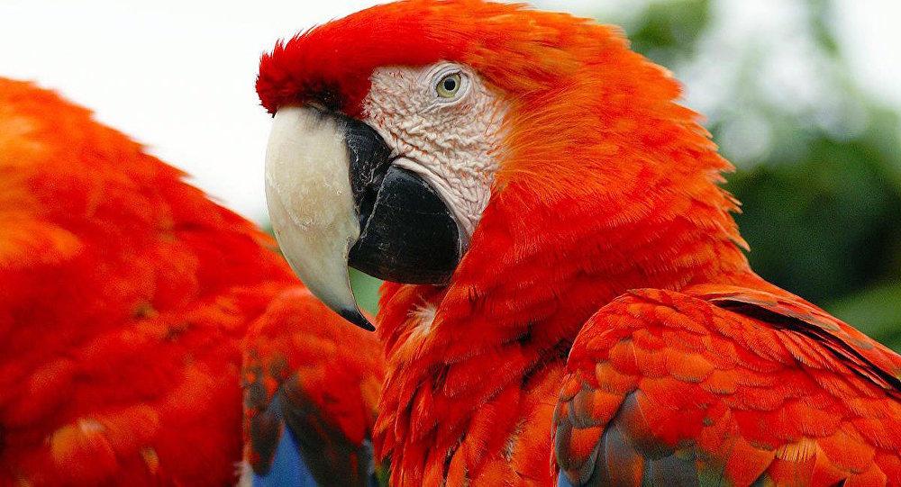 Papağan/kuş.