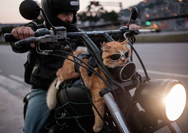 Motorcu kedi Rio'da 'asfaltları ağlatıyor'