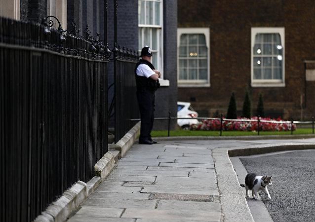 İngiltere'nin yeni başbakan adayı kedi Larry