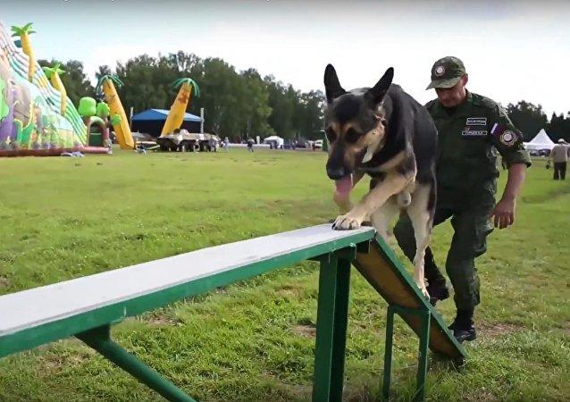 'Gerçek Dost': Uluslararası Ordu Oyunları'nda köpek yarışı heyecanı