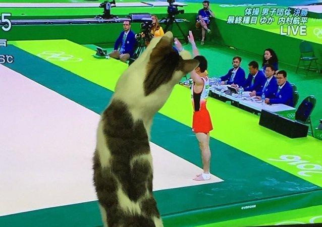 Olimpiyat oyunları kedilerin ilgisini çekmeyi başardı
