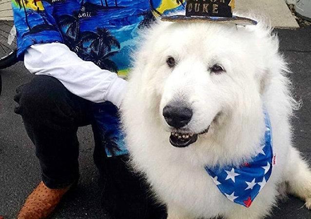 Belediye başkanı köpek Duke