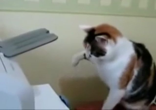 Kedi, yazıcıya karşı